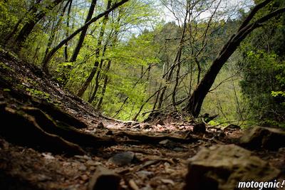 御岳山初夏の登山道