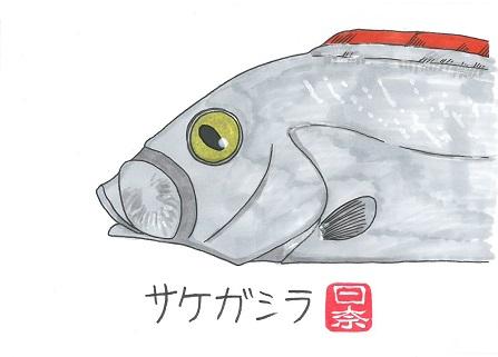 サケガシラ2