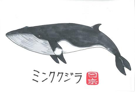 ミンククジラ2