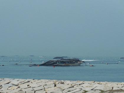 海苔収穫3