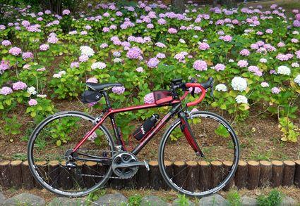 自転車と紫陽花