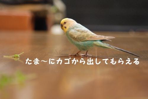 20150213_03.jpg