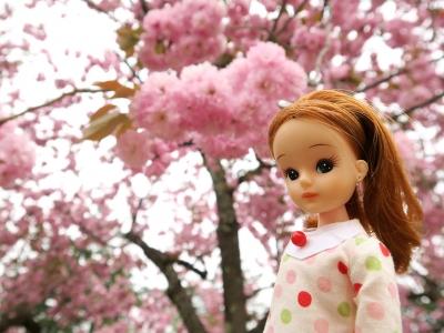 桜とリカちゃん
