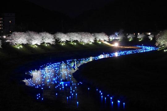 024夜桜3