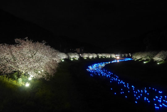 023夜桜2