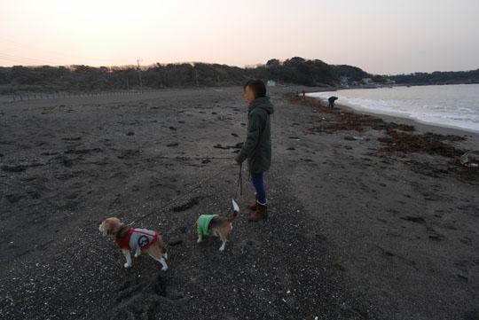 001早朝の散歩