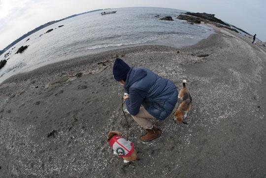 000海岸で貝拾い