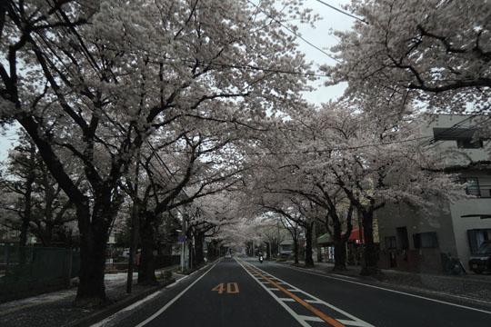 001桜トンネル