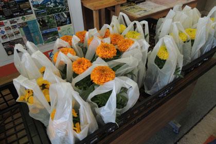 123象潟で花を