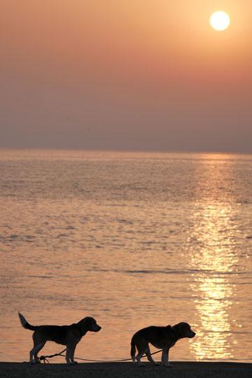 206ワンコと夕陽
