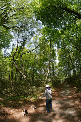 216ブナの森散策