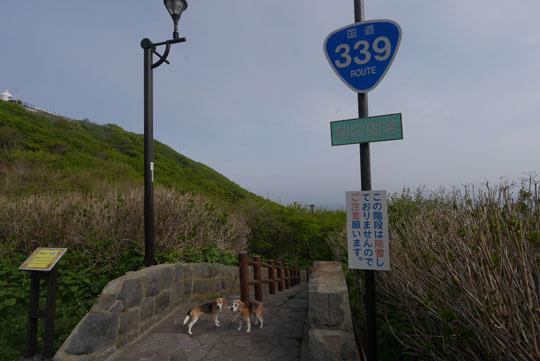 308階段国道で記念撮影