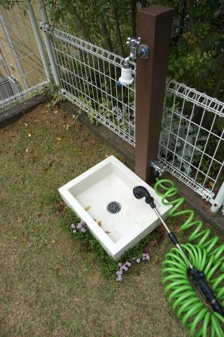 立水栓 植物