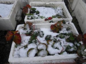 12-23雪