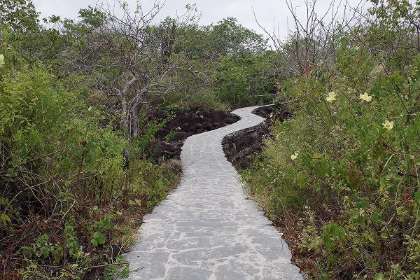 s-ガラパゴス諸島6日目 (16)
