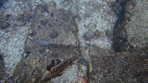 s-ガラパゴス諸島6日目 (42)