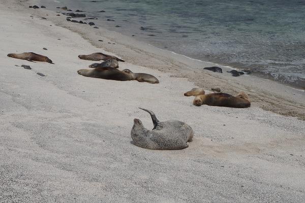 s-ガラパゴス諸島7日目 (9)