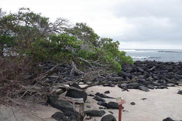 s-ガラパゴス諸島7日目 (10)