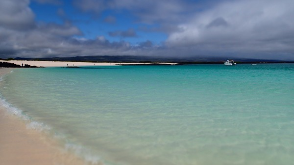s-ガラパゴス諸島8日目 (9)