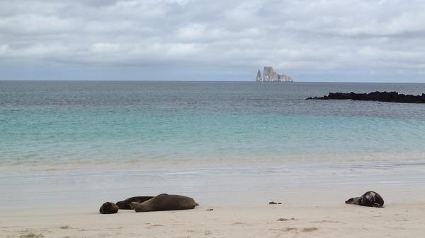 s-ガラパゴス諸島8日目 (6)
