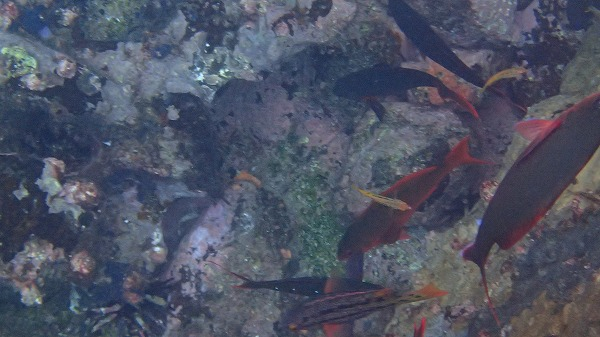 s-ガラパゴス諸島8日目 (22)