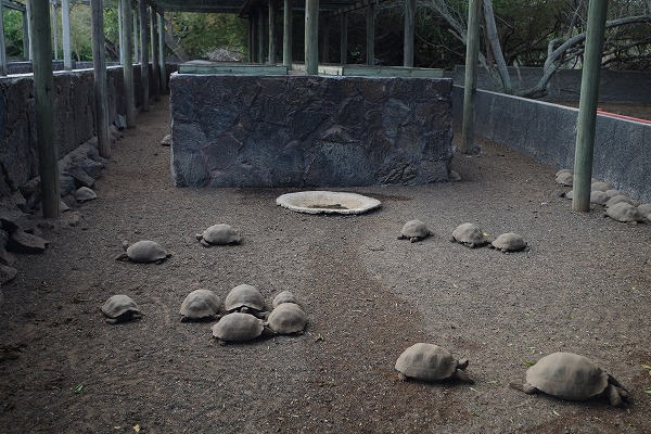 s-ガラパゴス諸島10日目 (27)