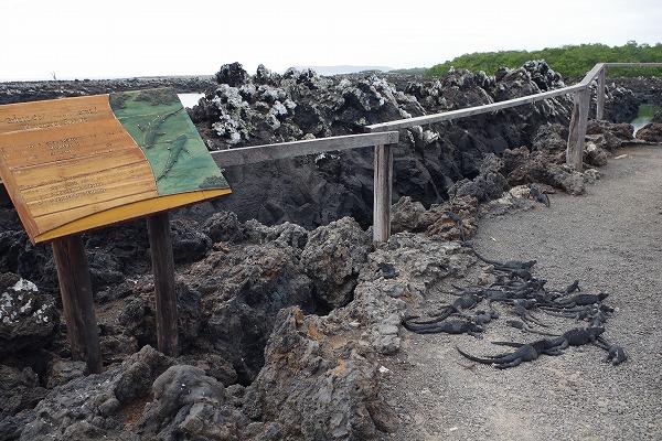 s-ガラパゴス諸島11日目 (7)