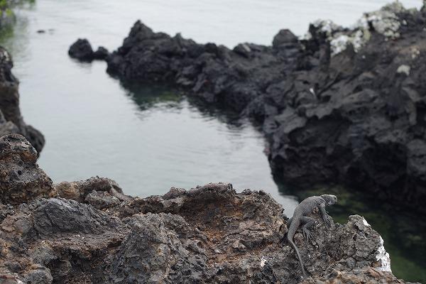 s-ガラパゴス諸島11日目 (9)