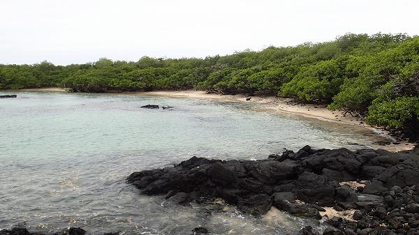s-ガラパゴス諸島11日目 (47)