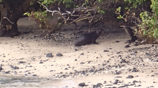 s-ガラパゴス諸島11日目 (48)