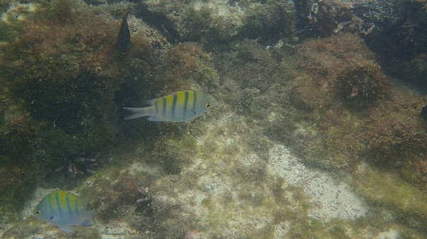 s-ガラパゴス諸島11日目 (53)