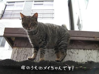 nikibi05