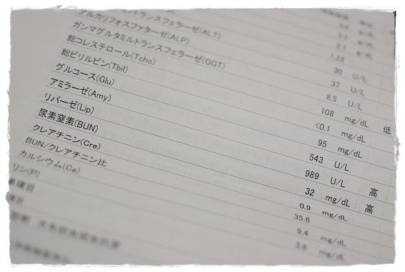 DSC_0014 (2)