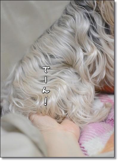 DSC_0013 (6)