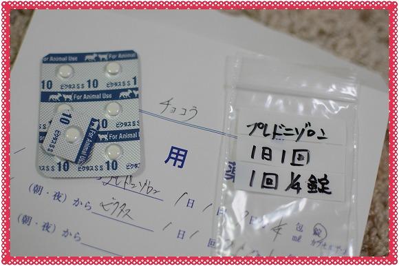 DSC_0011 (3)