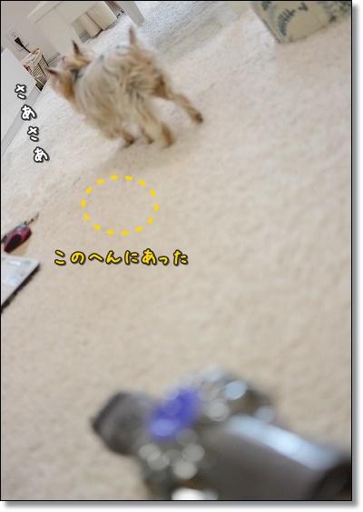 DSC_0037 (5)