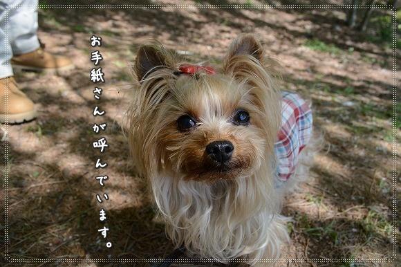 DSC_0126_20150505211913b70.jpg