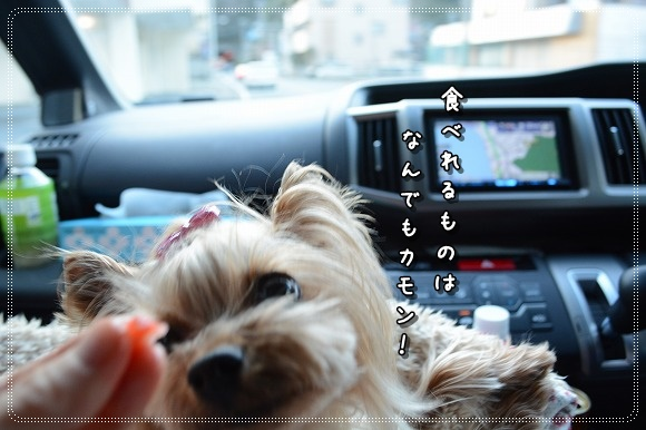 DSC_0130_201503102026439b1.jpg