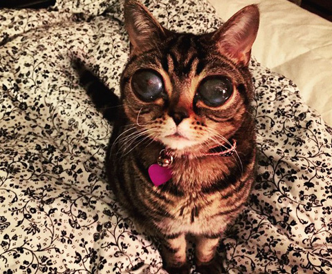 matilda-the-alien-cat-strange-eye-condition-gives-her-alien-appearance-with-bulged-out-eyes-e1434193844435