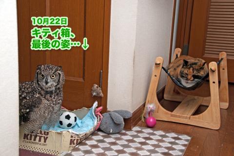 kitty_box_122114