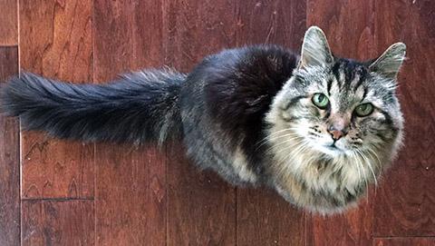 oldest-living-cat-header_tcm25-391830