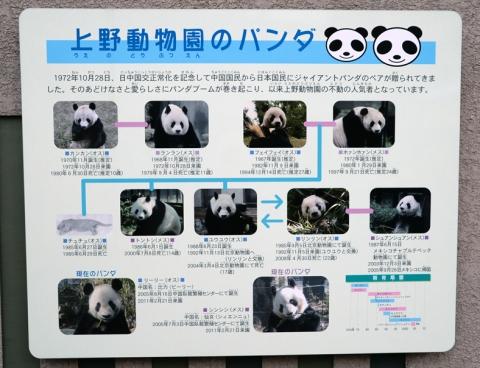 panda10_020914