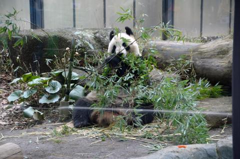 panda3_020914