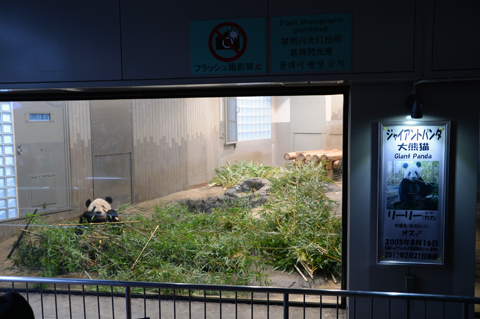 panda8_020914
