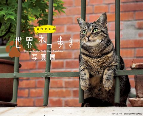 sekainekoaruki_title_main