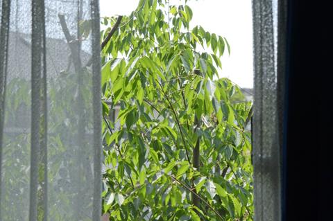 tree1_050415