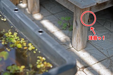 tsumaguro1_050815