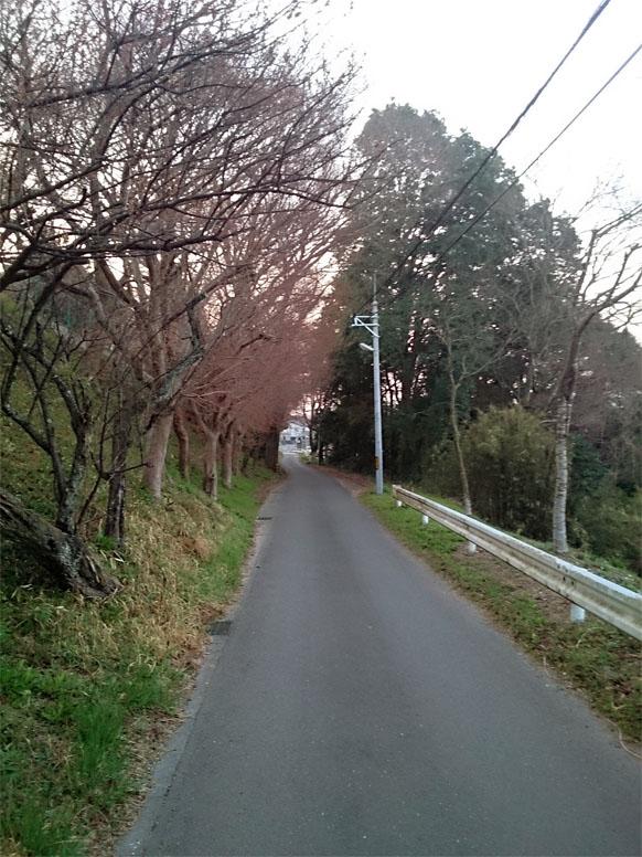 takahama270330011.jpg