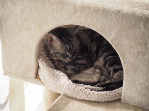 h27,1猫タワーで寝るナナ