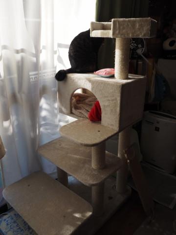 h27,1猫タワーとちいた
